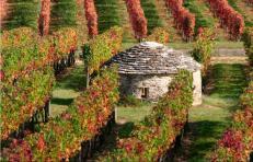 vinhedos-da-bourgogne